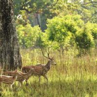 Bardia-National-Park-880x447